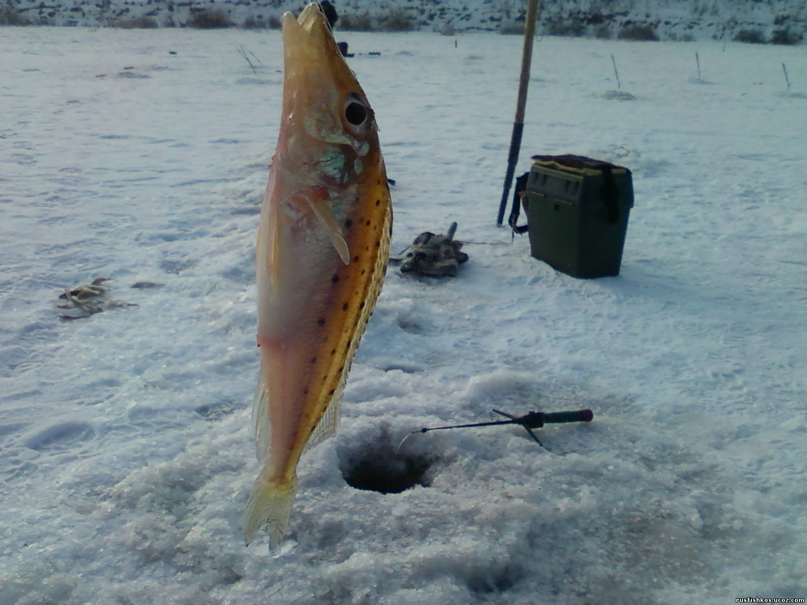 рыба толстолобик места обитания